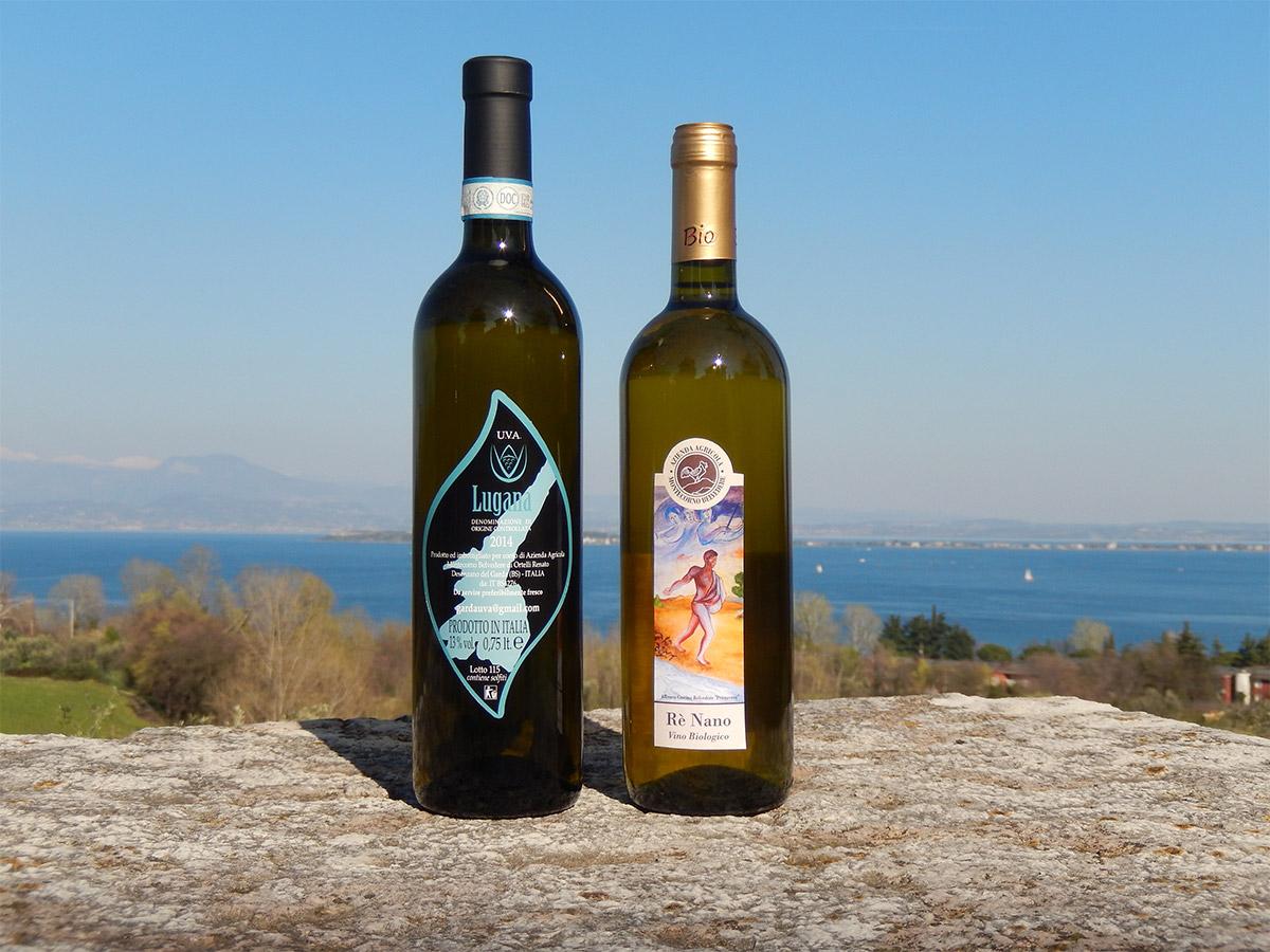 vini_bianchi_montecorno